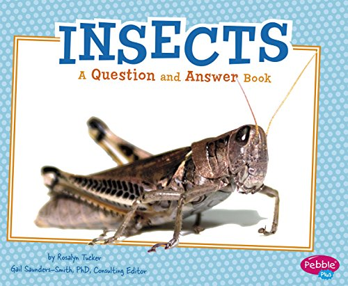 Insects: A Question and Answer Book (Animal Kingdom Questions and Answers)