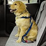 SMALL / MEDIUM – BLUE – Dog Car/Truck Safety Harness – Adjustable Nylon Web with Quick Release Buckles, My Pet Supplies