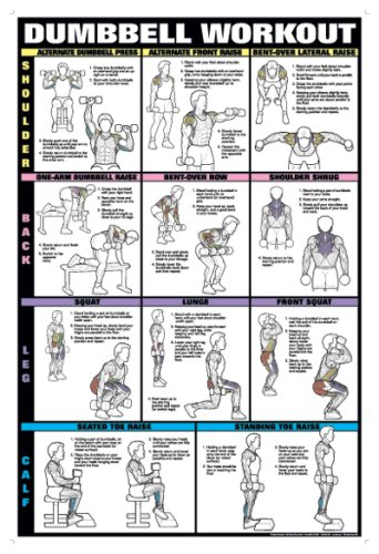 Dumbbell Workout Ii 24 U0026quot  X 36 U0026quot  Laminated Chart  Shoulder