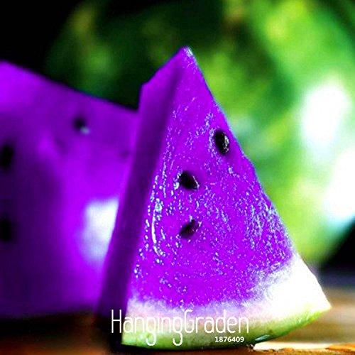 hot-sale50-pieces-bag-rare-purple-flesh-watermelon-seeds-super-big-water-melon-seeds-for-home-garden