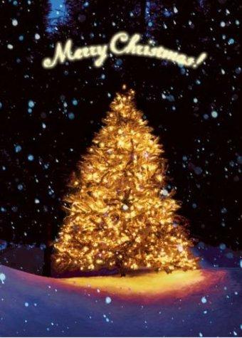 Christmas Tree at Night (Holiday Boxed Cards) (Boxed Cards Night Christmas)