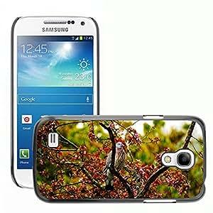 Hot Style Cell Phone PC Hard Case Cover // M00130215 Bird Pigeon Tree Spring Rain // Samsung Galaxy S4 Mini i9190