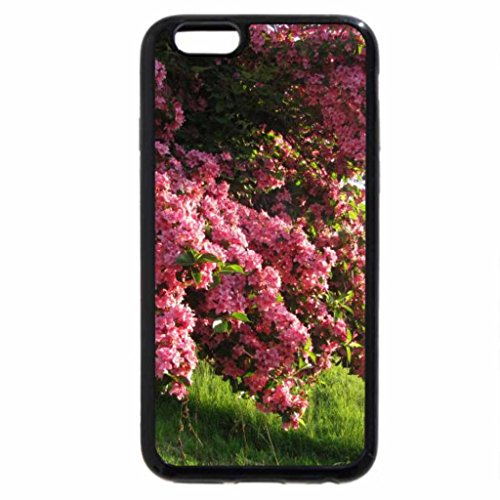 iPhone 6S / iPhone 6 Case (Black) rhododendron
