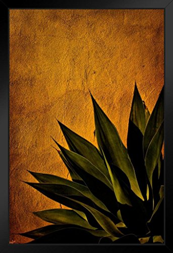 (Agave On Adobe Sunset by Chris Lord Photo Art Print Framed Poster 14x20 inch)
