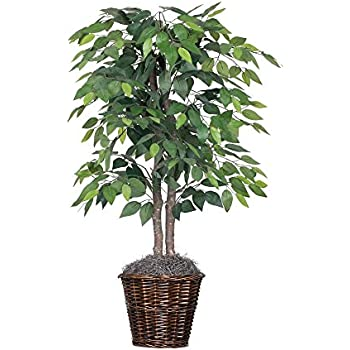 fake ficus tree nearly 5209 ficus silk tree 6 3659