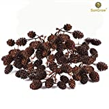 50 Naturally Grown, Pesticide-Free SunGrow Alder Cones for Shrimps --- Lowers pH level, Fight Bacteria and Prevent Fungal Infections in Aquatic Environment - Perfect for both big & small Aquariums