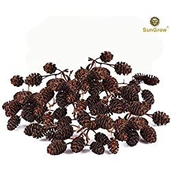 SunGrow Alder Cones for Shrimps, 0.5-1 Inch, Promote Breeding in Freshwater Tanks, Perfect for Both Big and Small Aquariums, 50 Pack