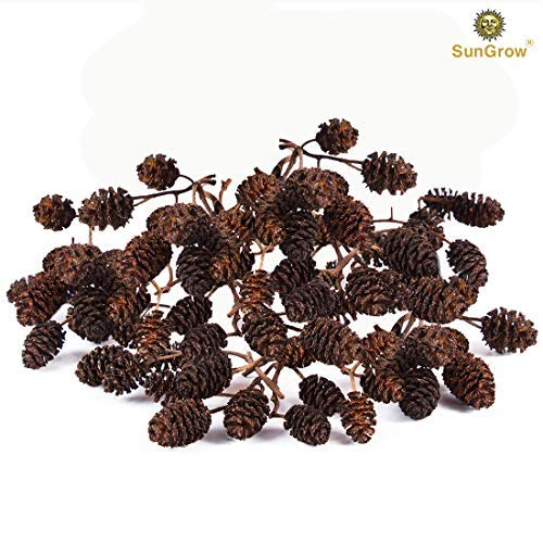 SunGrow Alder Cones for Shrimps, 0.5-1 Inch, Promote Breeding in Freshwater Tanks, Perfect for Both Big and Small Aquariums, for Shrimp and Other Tropical Pets, Lowers pH Level, Pack of 50 from SunGrow