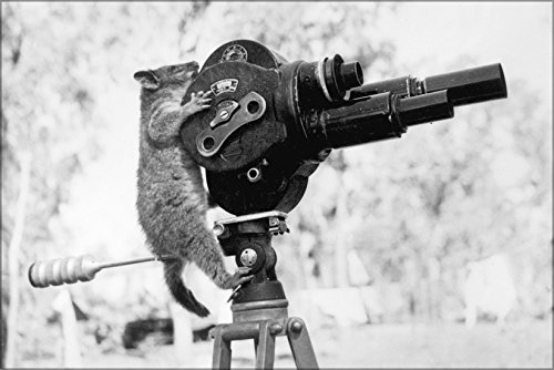 Poster A Possum And A Movie Camera 1943