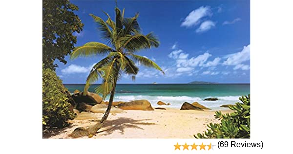 beach palm tree landscape photography. amazoncom palm beach tropical landscape photo art poster print 36 x 24in pictures wall posters u0026 prints tree photography