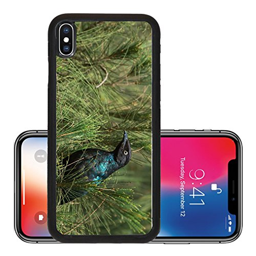Liili Premium Apple iPhone X Aluminum Backplate Bumper Snap Case A Long Tailed Starling Lamprotornis chalcurus perched in an casuarina tree - Casuarina Stores