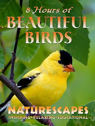 8 Hours of Beautiful Birds - Naturescapes