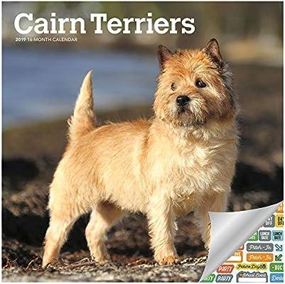 Cairn Terriers - Calendario 2019 Deluxe 2019 Cairn Terriers ...