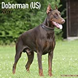 Doberman Calendar 2017 (US) - Doberman Pinscher - Dog Breed Calendars - 2016 - 2017 wall calendars - 16 Month by Avonside