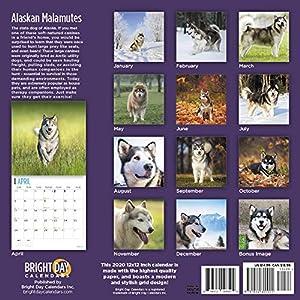 Alaskan Malamutes Calendar 2020 44