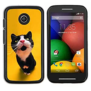 Stuss Case / Funda Carcasa protectora - Gato curioso lindo - Motorola Moto E