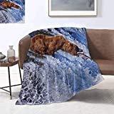 smllmoonDecor Nature Warm Microfiber All Season Blanket Grizzly Bear at Katmai National Park Alaska Waterfall Catches Fish Wildlife Picture Summer Quilt Comforter 60