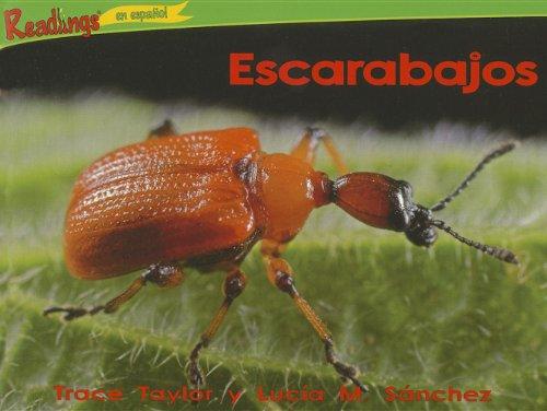 escarabajos-beetlesk-3