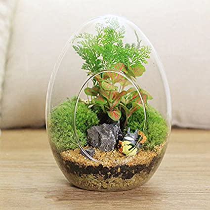 Ochoos Gardening Egg Shaped DIY Moss Micro Landscape Glass Bottle Succulent Plants Vase Home Decoration -