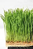 Terrafibre Hemp Grow Mat - Perfect for Microgreens, Wheatgrass, Sprouts - Fully Biodegradable