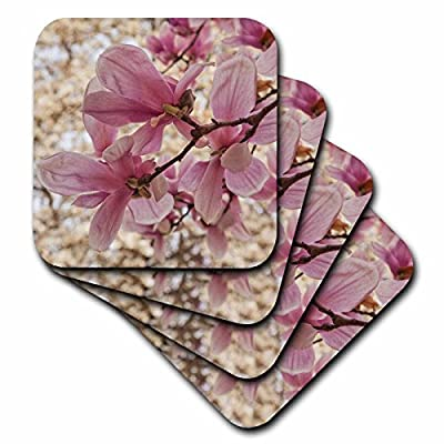 3dRose Danita Delimont - Flowers - Yulan Magnolia blossoms, Cave Hill Cemetery, Louisville, Kentucky - Coasters
