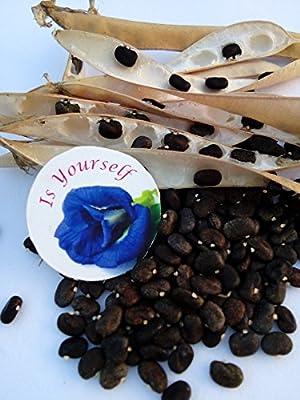 Blue pea flower Butterfly pea Flower 25 seeds