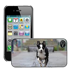 Hot Style Cell Phone PC Hard Case Cover // M00117102 Border Collie Fountain City // Apple iPhone 4 4S 4G