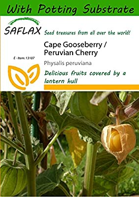 SAFLAX - Cape Gooseberry / Peruvian Cherry - 100 seeds - With soil - Physalis peruviana