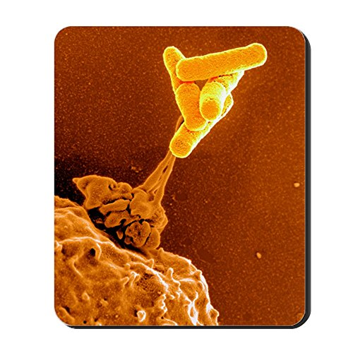 CafePress Neutrophil Cell and Bacteria, SEM Non-Slip Rubber Mousepad, Gaming Mouse Pad (Best Medicine For Dysentery)