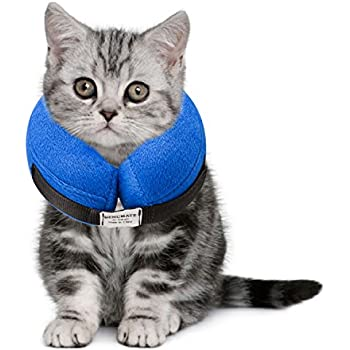 Best E Collars For Cats