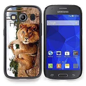 """Qstar Arte & diseño plástico duro Fundas Cover Cubre Hard Case Cover para Samsung Galaxy Ace Style LTE/ G357 (León lindo divertido que juega"""")"""