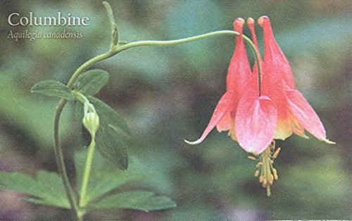 COLLECTIBLE POSTCARD: COLUMBINE /DETAILED INFORMATION