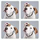american bulldog puppies for sale - Liili Square Coasters Non-Slip Natural Rubber Desk Pads Puppy american bulldog white with red spots isolated against grey background Studio portrait Image ID 21625