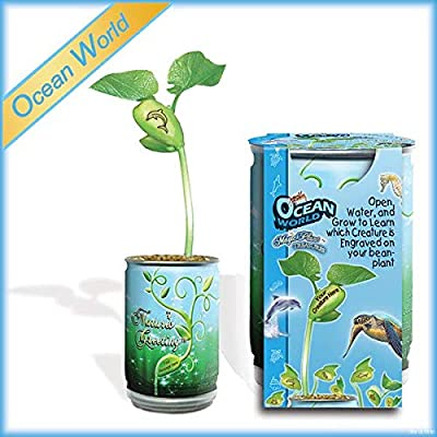Magic Plant Ocean World Grow Kit Plant for Kids - Reveals 1 of 6 Creatures -More: Garden & Outdoor