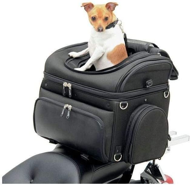 Klasse! Eine Hundebox Roller ermöglicht es Ihnen Ihr Hund sogar auf dem Roller mitzunehmen