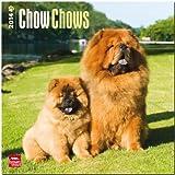 Chow Chows Calendar (Multilingual Edition)