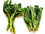 Chinese Broccoli Seeds - Brassica Oleracea Seeds - GAI LAN Seeds