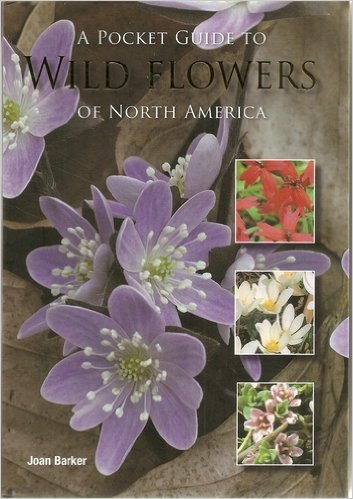 A Pocket Guide to Wild Flowers of North America Lohr Wildflower
