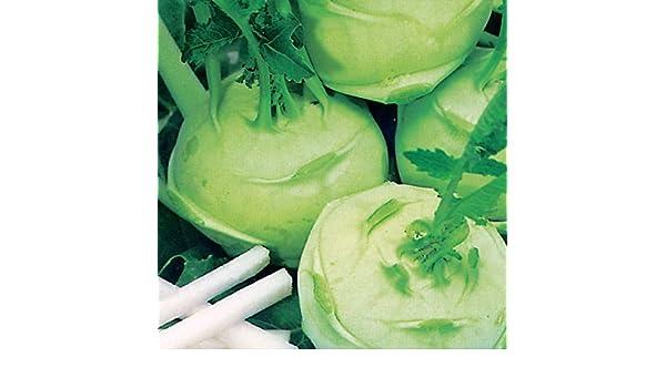 Vegetable Green Delicacy 1000 Seeds Kohl Rabi