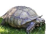 African Grasses Tortoise Blend Seeds Sulcata Leopard Grass #ST24 (40K Seeds, or 1/4 Pound)