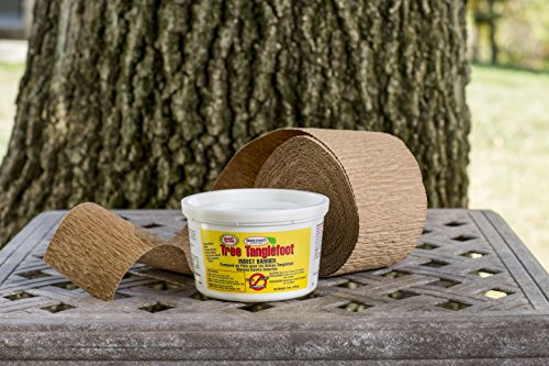 Tanglefoot Tree Care Kit