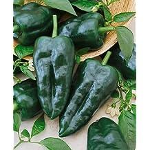 "50+ Heirloom Hot Pepper Garden Seeds - ""Ancho Grande - Pablano"" Mild Pepper!"