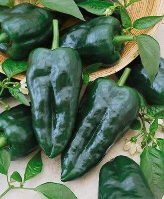 50+ Heirloom Hot Pepper Garden Seeds - ''Ancho Grande - Pablano'' Mild Pepper!