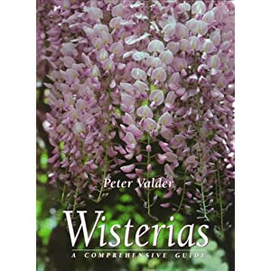Wisterias: A Comprehensive Guide