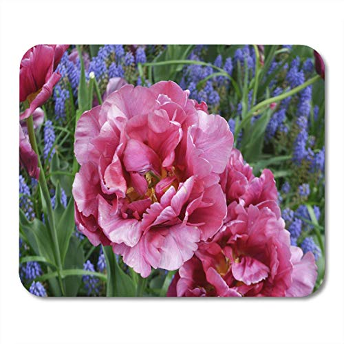 Mouse Pad Pink Double Foxtrot Tulip Early Floral Flower Garden Lilac Mousepad for Notebooks,Desktop Computers Mouse Mats, Office Supplies