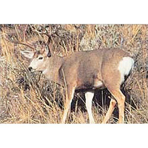 Tru-Life Paper Targets - Mule Deer Sneak
