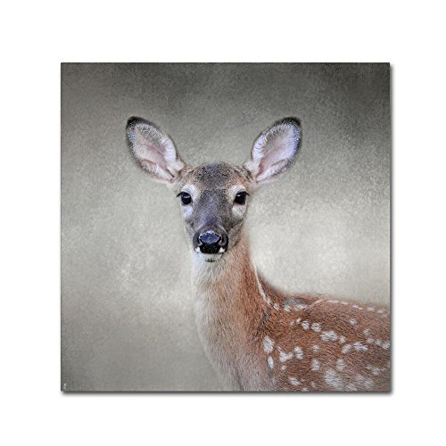 Little Miss Lashes White Tailed Fawn by Jai Johnson, 35x35-Inch Canvas Wall (Fawn Canvas)