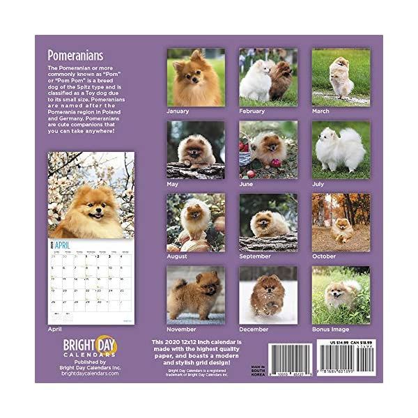 2020 Pomeranians Wall Calendar by Bright Day, 16 Month 12 x 12 Inch, Cute Dogs Puppy Animals Pom-Pom Canine 2
