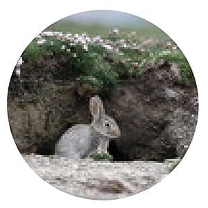 alfombrilla de ratón Conejo, Oryctolagus cuniculus - ronda - 20cm