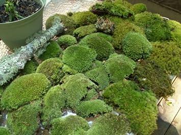 garden mats. Appalachian Emporium\u0027s Super Mix Live Fresh Moss For Terrariums, Vivariums, Bath Mats, Garden Mats